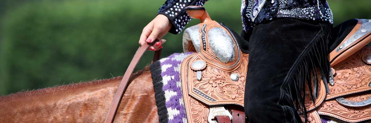 aqha-show-horse